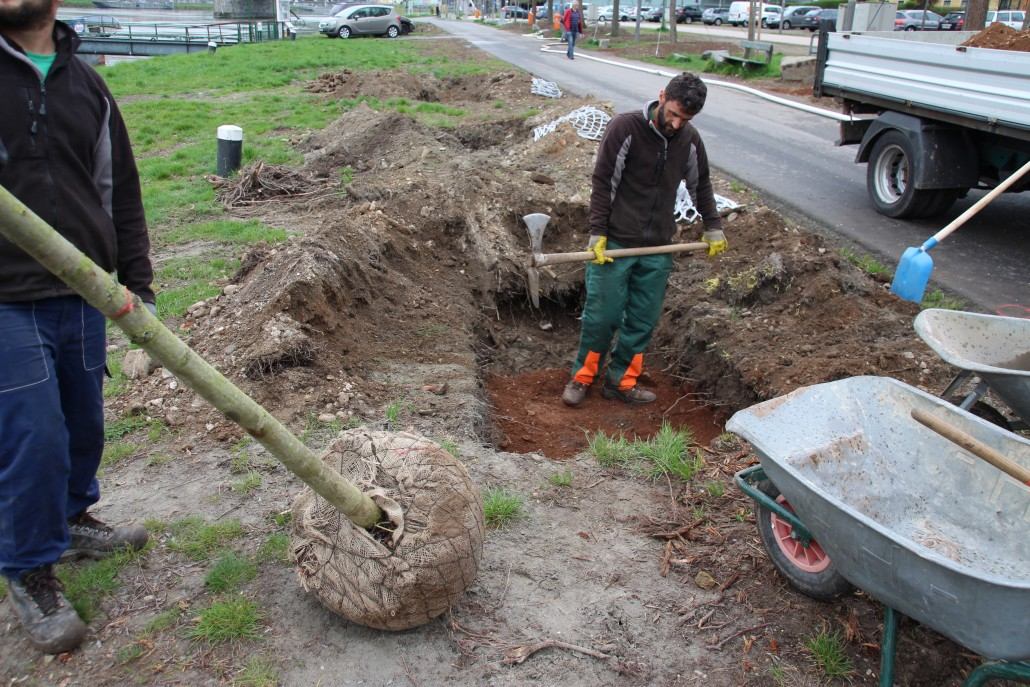 bel ftung und bew sserung von stadtb umen gro baumverpflanzung lite soil gmbh. Black Bedroom Furniture Sets. Home Design Ideas