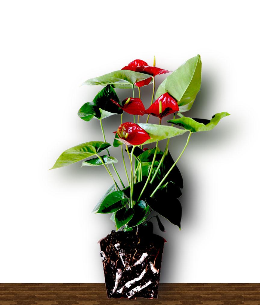 belüftung und bewässerung von hochbeeten und pflanzentrögen – lite