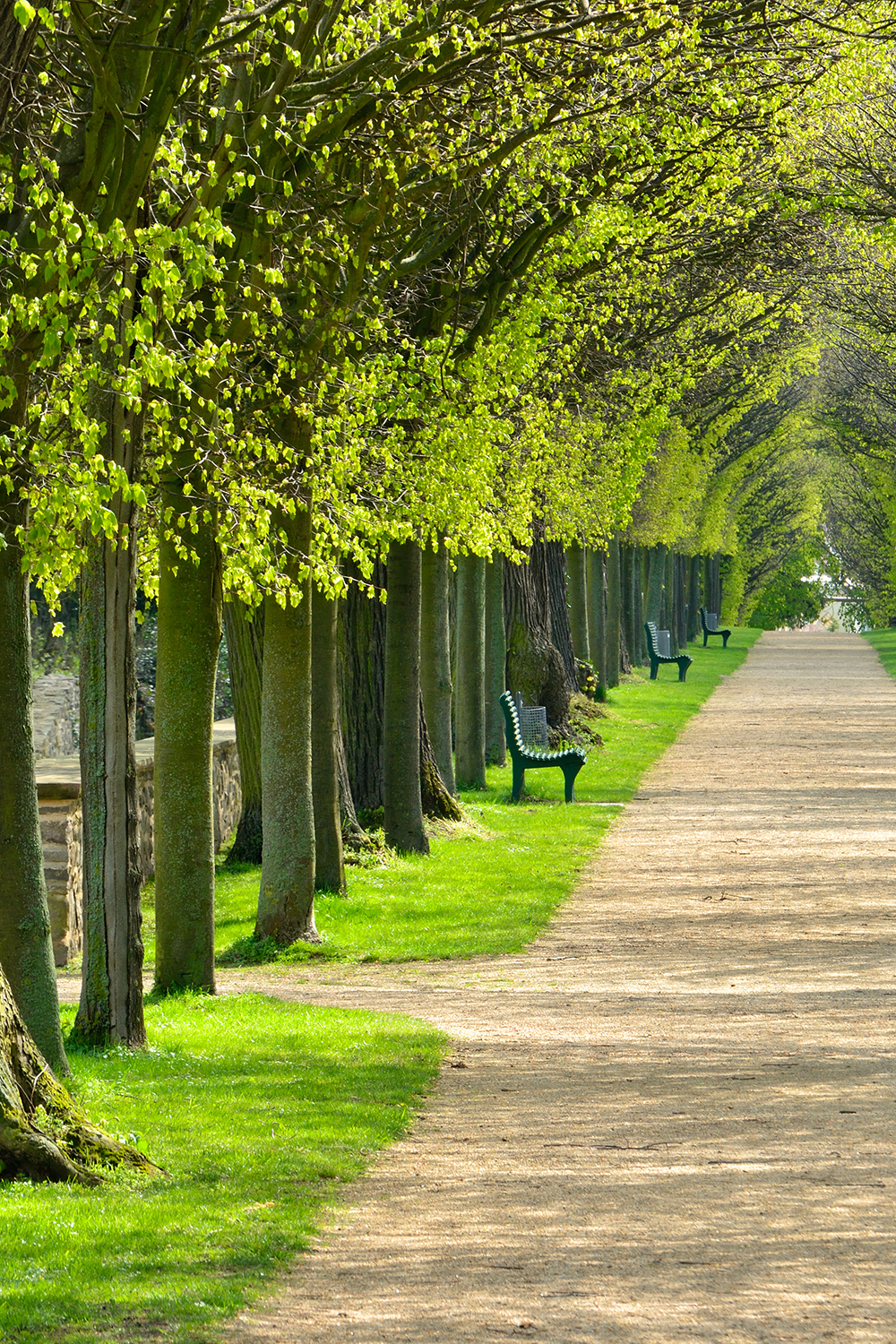 Aeration And Irrigation Of Trees In Cities Moving Large Trees