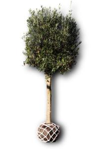 Wasserspeicher Wasser sparen Baum Anwachsen LITE-NET